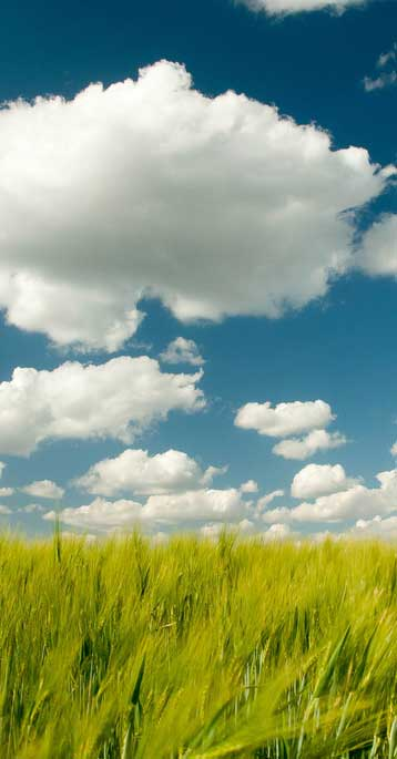 beautiful clouds and grass